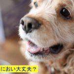 室内犬が臭い原因は体臭?匂い対策や予防方法は?