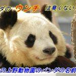 パンダのウンチが臭くない理由は?歴代の上野動物園のパンダの名前は?