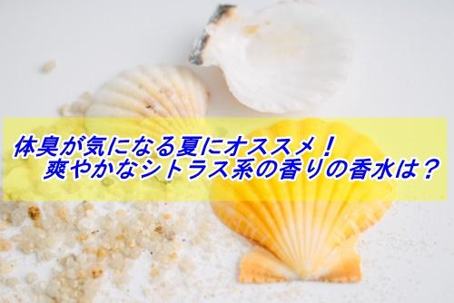 白背景 貝殻1