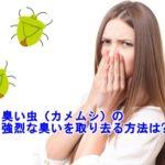 臭い虫(カメムシ)はどうして臭う?強烈な臭いを取り去る方法は?
