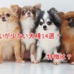 臭いが少ない犬種14選!においの原因や対処法は?特徴は何?